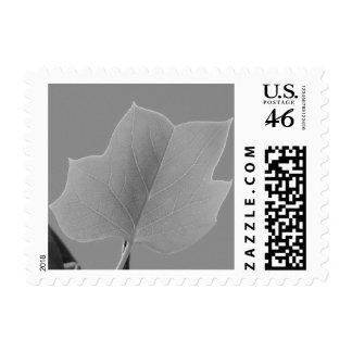 Poplar Leaf Postage Stamp