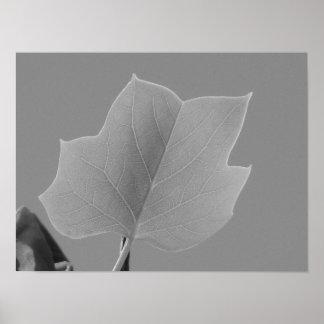 Poplar Leaf Print