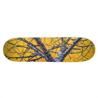 Poplar Tree Crown Skateboard Deck