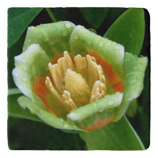 Poplar Tree Tulip After the Rain Trivet