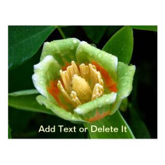 Poplar Tree Tulip postcard