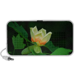 Poplar Tree Tulip speaker
