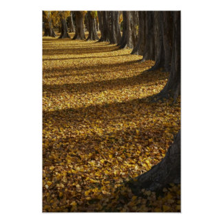 Poplar Trees in Autumn, Lake Wanaka, Otago, Print