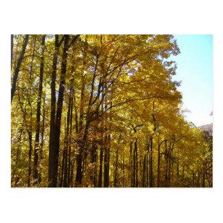 Poplars Postcard