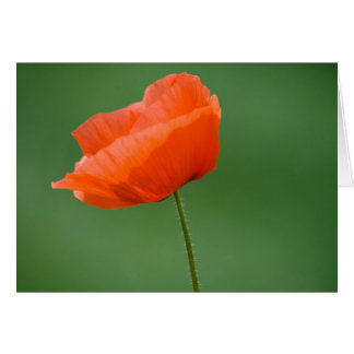 Poppie in Nidd Greeting Card