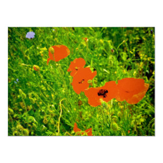 Poppies 6.5x8.75 Paper Invitation Card
