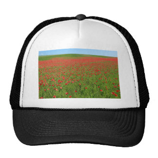 Poppies alive! mesh hats