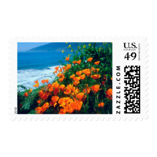 Poppies along the Pacific Coast near Big Sur Postage