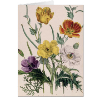 Poppies and Anemones Greeting Card