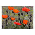 Poppies and Dragonflies Card