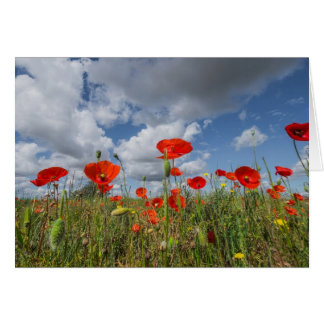 Poppies and sky card
