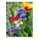 Poppies and Tulips Post Cards