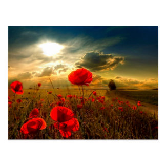 Poppies beautiful day postcard