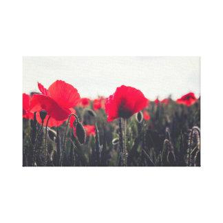 Poppies Canvas