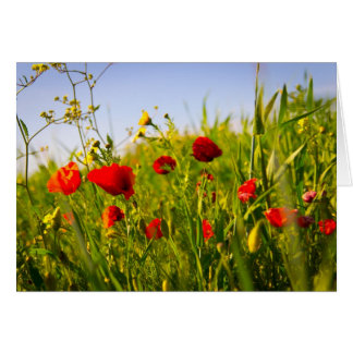 Poppies Card