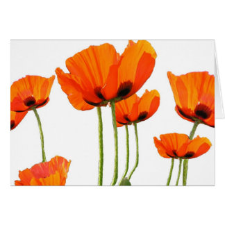 Poppies! Greeting Cards