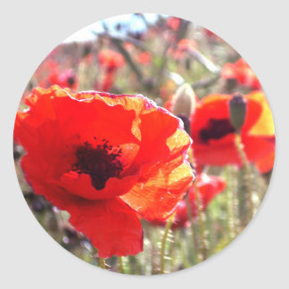 Poppies Classic Round Sticker
