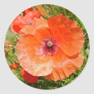 Poppies - Coquelicots Classic Round Sticker