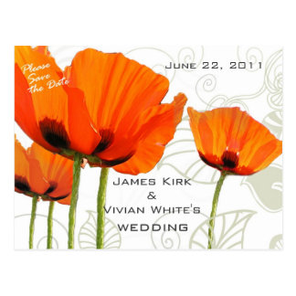 Poppies Deco Shawn Postcard