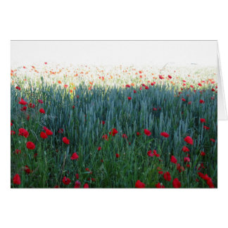 Poppies in Field of Barley Card