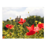 Poppies in Italy Postcard