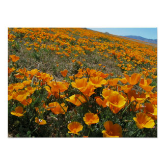 Poppies in Perspective Poster