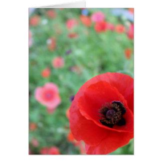 Poppies in Poppy Field Card