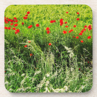 Poppies in the Field Beverage Coaster