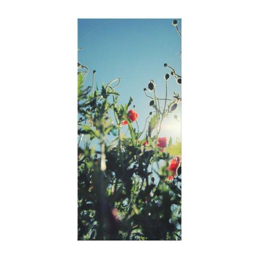 Poppies Lienzo Envuelto Para Galerias