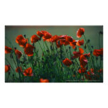 Poppies No. 3 | Canvas Print