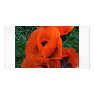 Poppies Picture Card