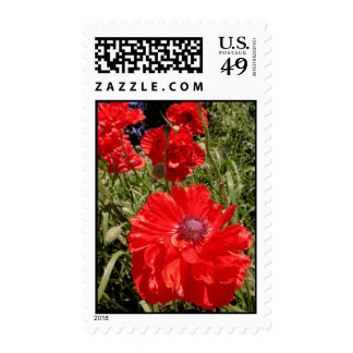 Poppies Postage Stamp