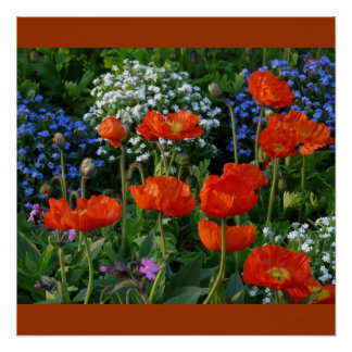 Poppies Red Vines Spring Love Peace Destiny Poster