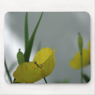 Poppies & shade (6) mouse pad