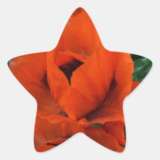 Poppies Star Sticker