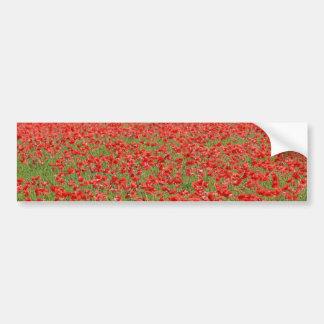 Poppies - thousands! car bumper sticker