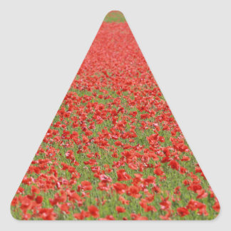Poppies - thousands! triangle sticker