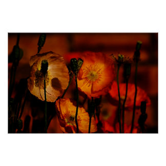 Poppies When Evening Comes Poster