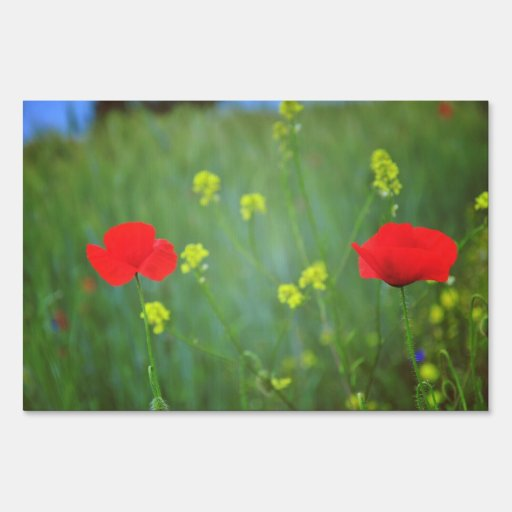Poppies Yard Sign