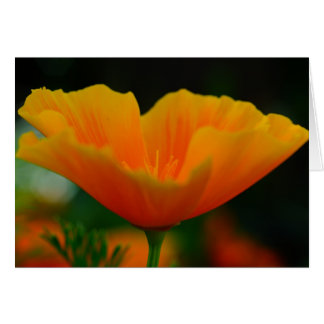 Poppin Poppies! Card
