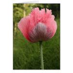 Poppy_1547 Greeting Card
