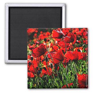 Poppy 2 Inch Square Magnet