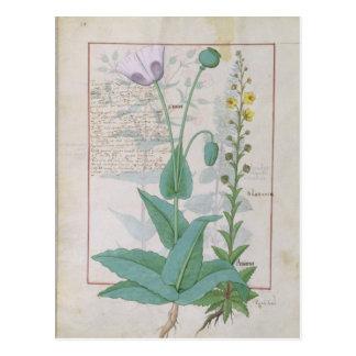 Poppy and Figwort Postcard