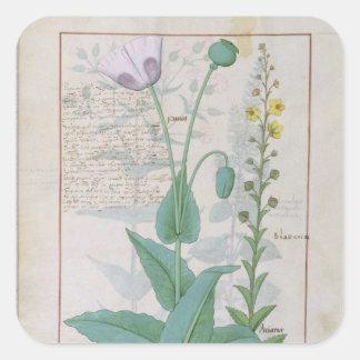 Poppy and Figwort Square Sticker