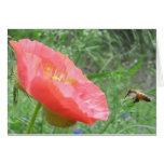 Poppy Bee Greeting Card