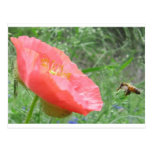 Poppy Bee Post Card