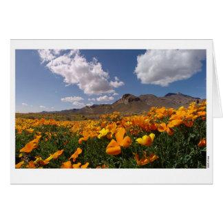Poppy Bloom - El Paso, Texas Card