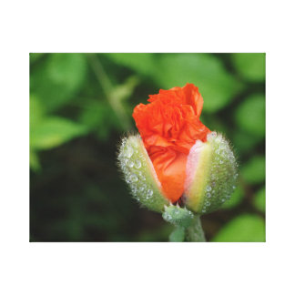 Poppy Bloom - Jamiol's Art Flowers Collection Canvas Print