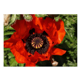 Poppy bloom orange business card
