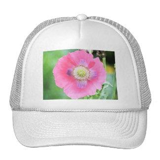 Poppy Bloom - Papaver Somniferum Trucker Hat